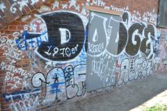 DODGE ALF21